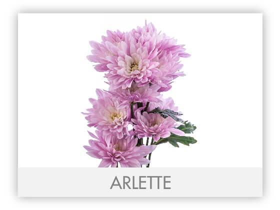 ARLETTE101
