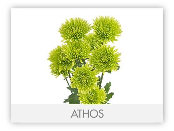ATHOS 10