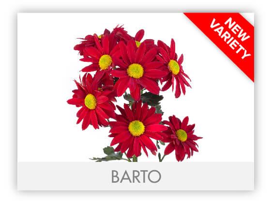 BARTO102