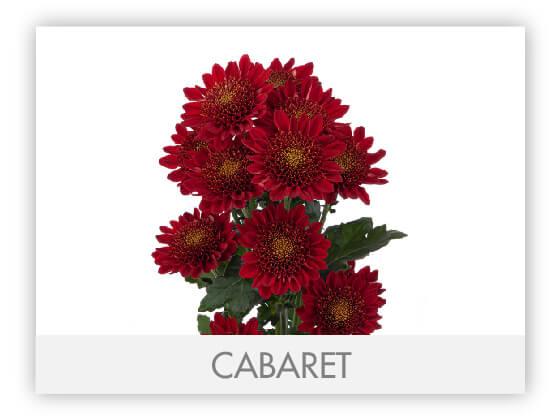 CABARET10