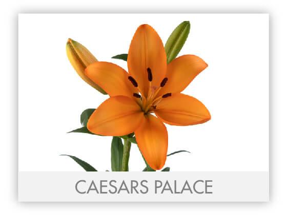 CAESARS PALACE 10