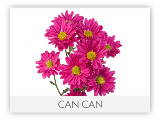 CAN CAN 10