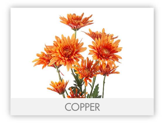 COPPER101
