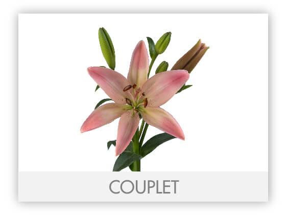 COUPLET10