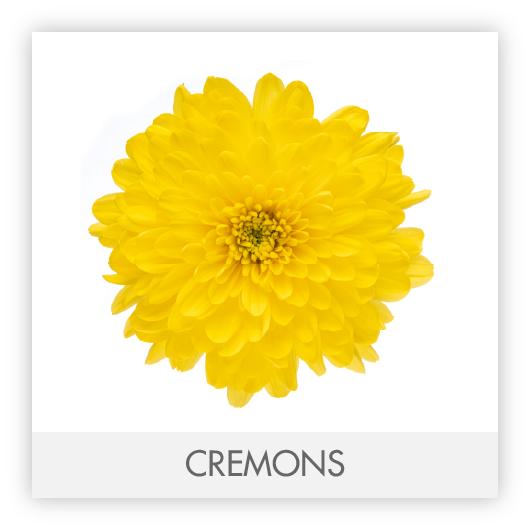 CREMONS-100