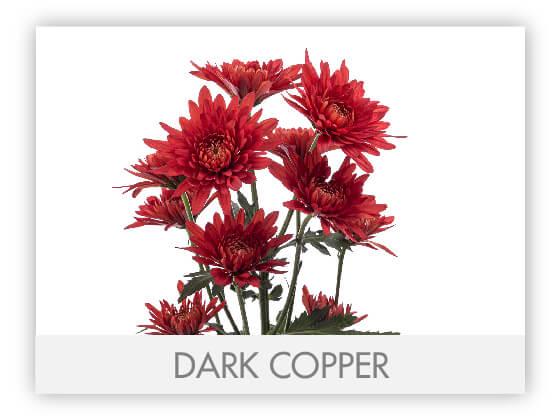 DARK COPPER 101