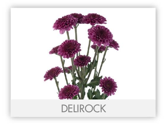 DELIROCK10