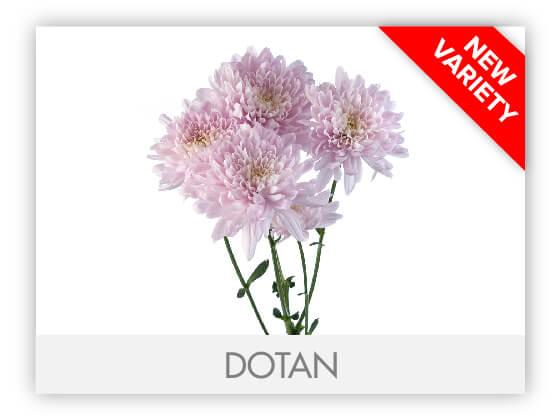 DOTAN102