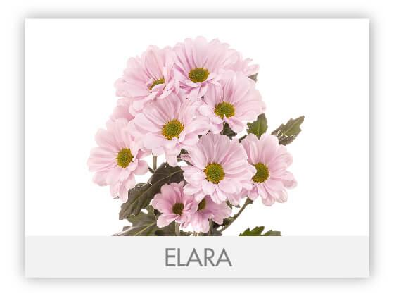 ELARA10