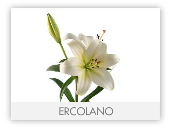 ERCOLANO10
