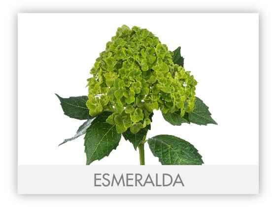 ESMERALDA10