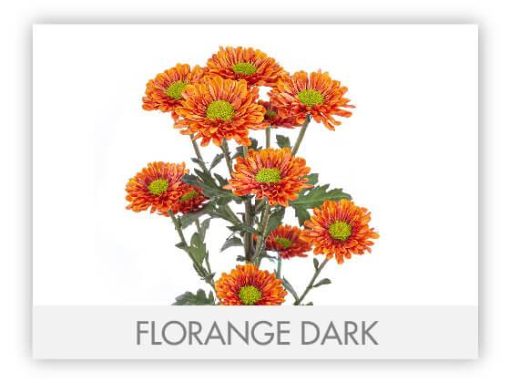 FLORANGE DARK 10