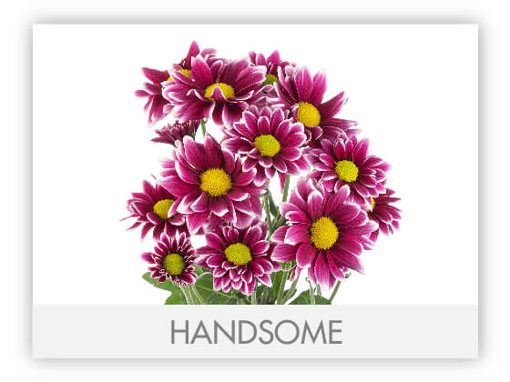 HANDSOME10