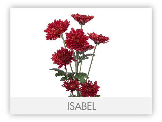 ISABEL101