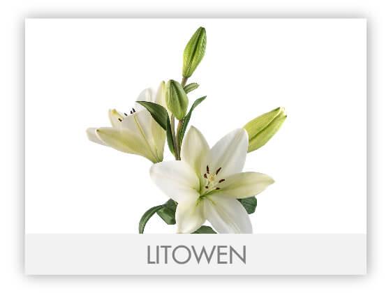 LITOWEN10