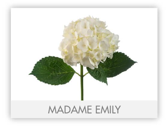 MADAME EMILY