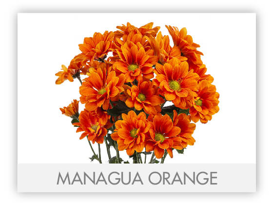 MANAGUA ORANGE 10