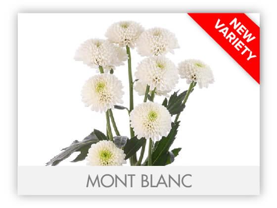 MONT BLANC 102