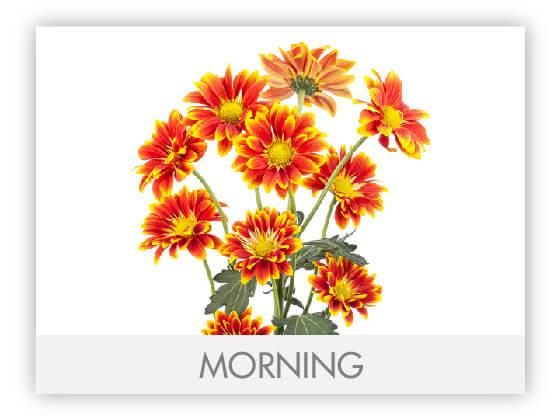 MORNING10