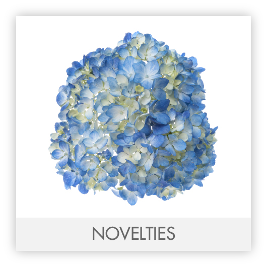 NOVELTIES-100