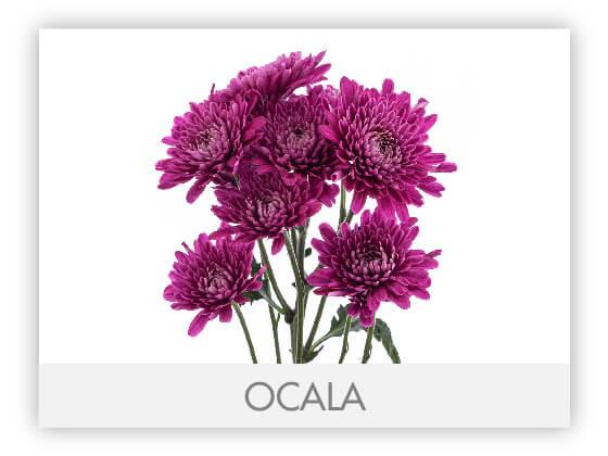 OCALA101