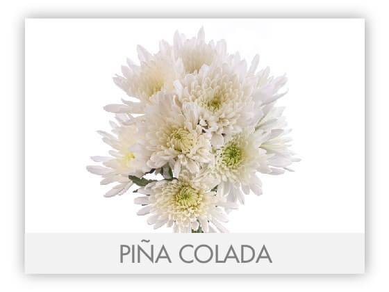 PIÑA COLADA 101