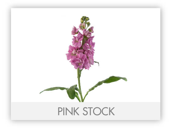 PINK STOCK 10