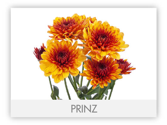 PRINZ101