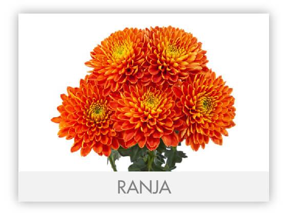 RANJA101