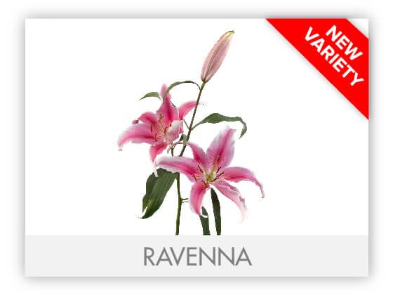 RAVENNA10