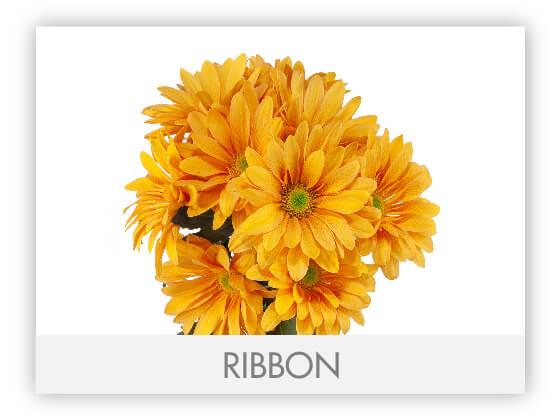 RIBBON10