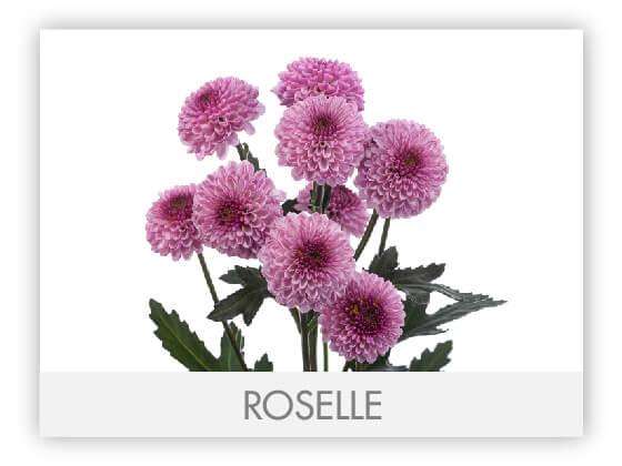 ROSELE