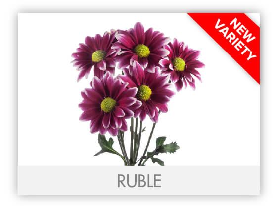 RUBLE102