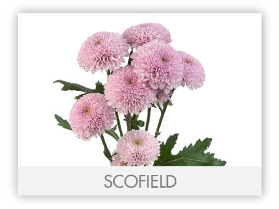 SCOFIELD10