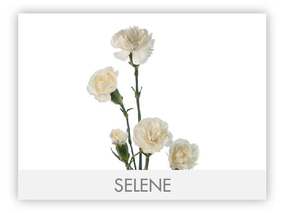 SELENE101