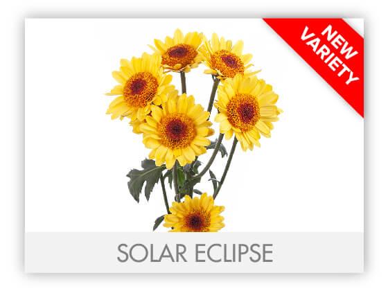 SOLAR ECLIPSE 102