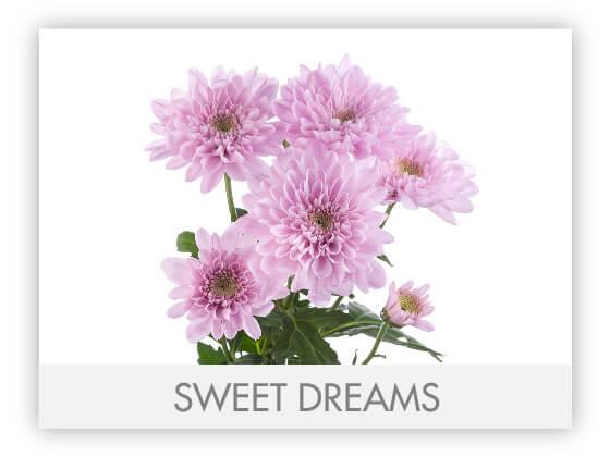 SWEET DREAMS 101