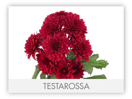 TESTAROSSA101
