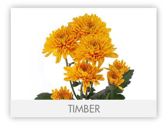 TIMBER101