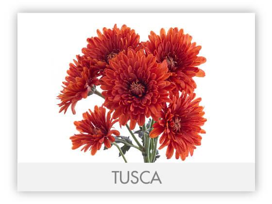TUSCA101