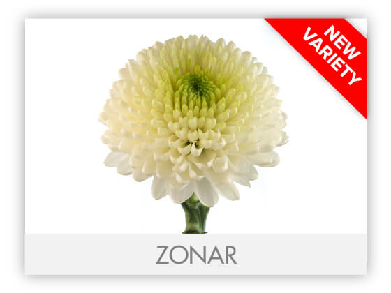 ZONAR10