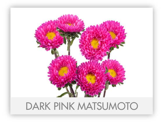 DARK PINK MATSUMOTO