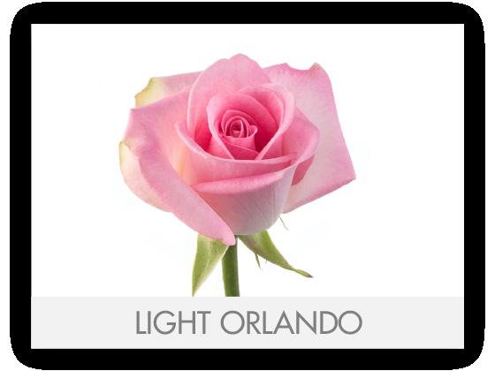 LIGHT ORLANDO