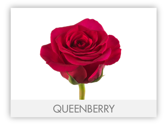 QUEENBERRY