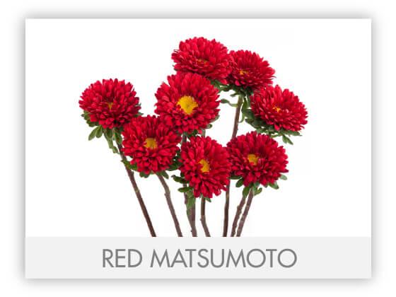 RED MATSUMOTO