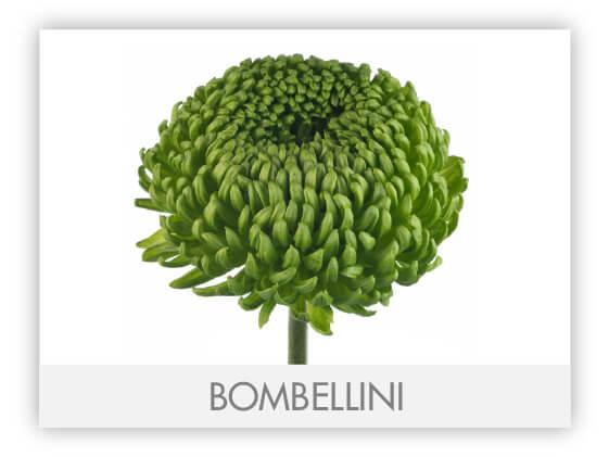 BOMBELLINI-100