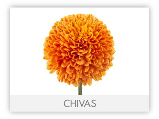 CHIVAS-100