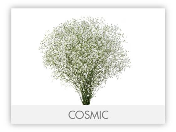 COSMIC-100