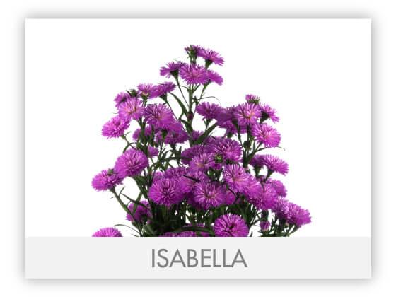 ISABELLA-100