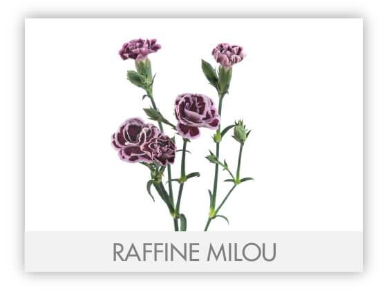 RAFFINE MILOU -100